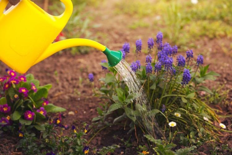 Цветы в качестве подарка из собственного сада