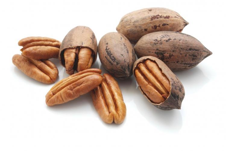 Пекан — самый питательный из орехов